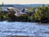 8/3/15 bird, MBSP