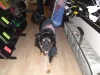 shop-dogs-002-1000-x-750