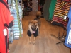 shop-dogs-006-1000-x-750
